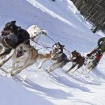 Dog_Sled_Rides_(6982734689)